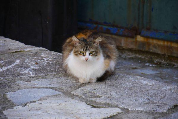 Street cats story, ou la vie des chats des cyclades