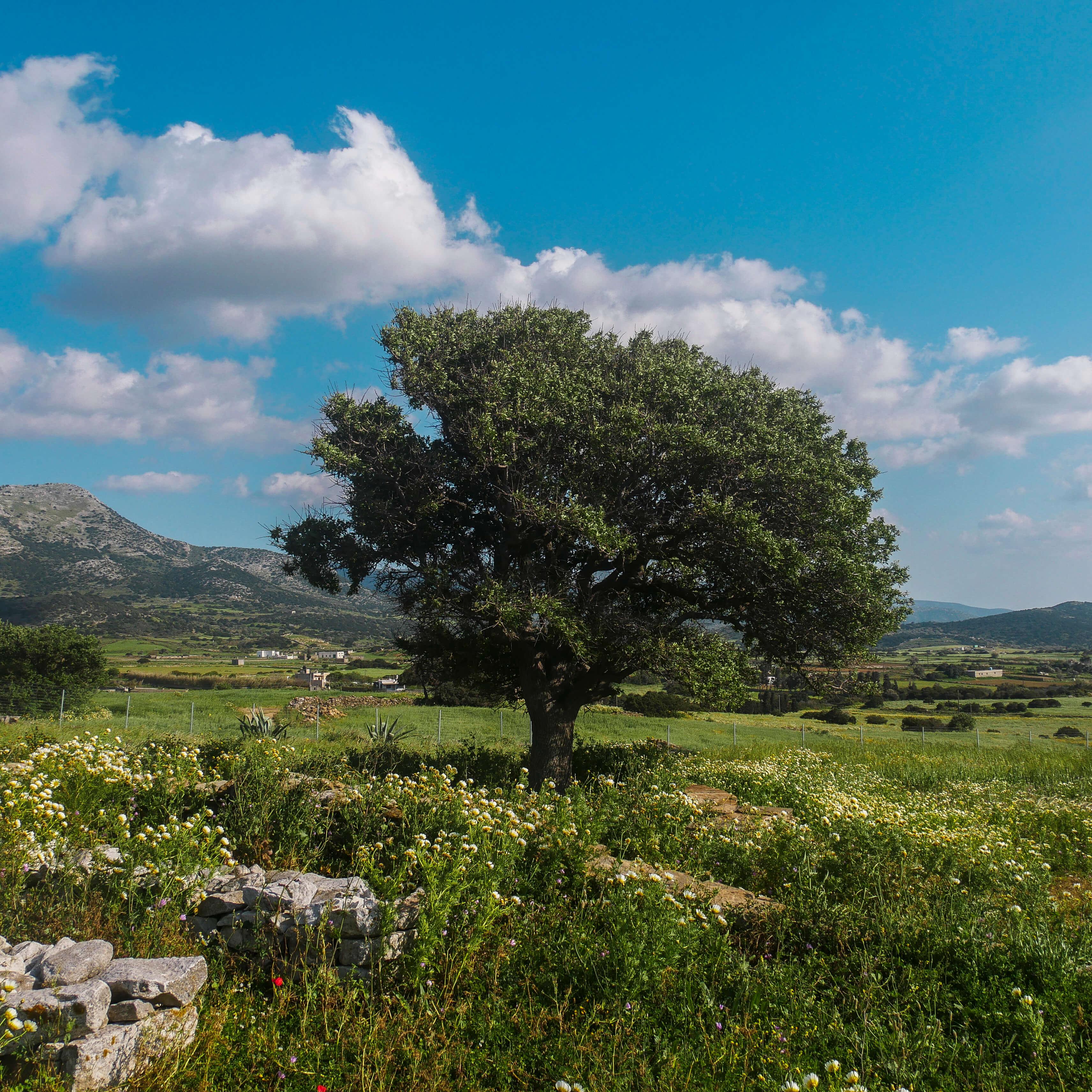 Vallée de Sangri, Naxos, Grèce