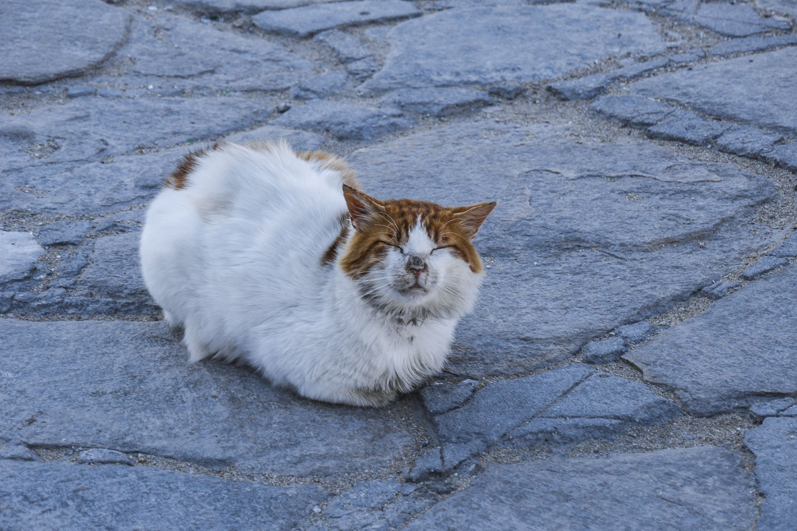 Chat roux et blanc à Mykonos