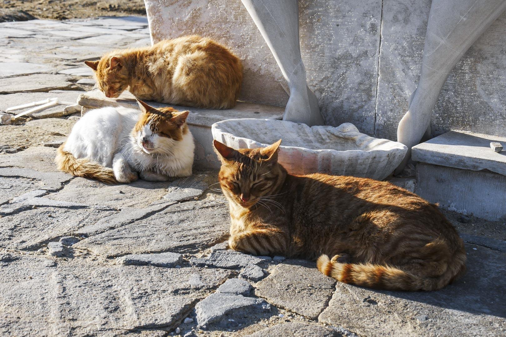 Famille de chats de Mykonos
