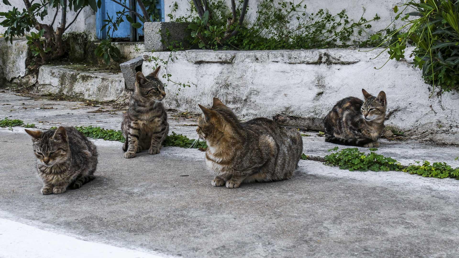 Famille de chats en Grèce