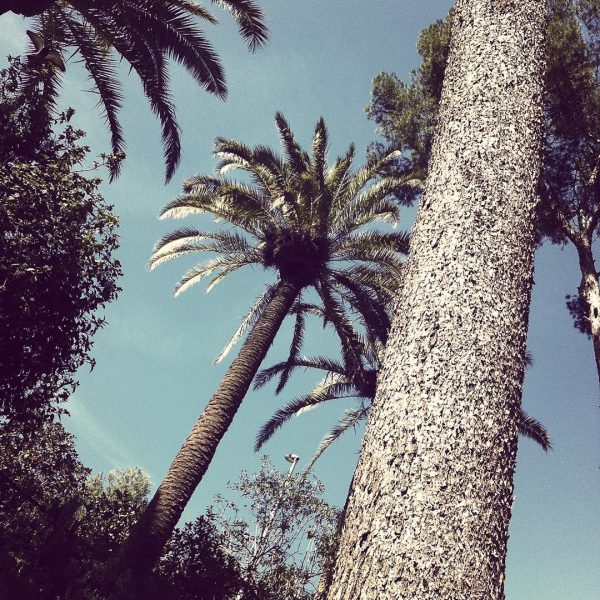 barcelone-palmiers
